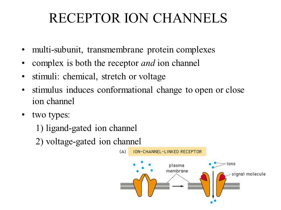 RECEPTOR ION CHANNELS multi-subunit, transmembrane protein complexes complex is both the receptor and ion channel stimuli: chemical, stretch or voltag