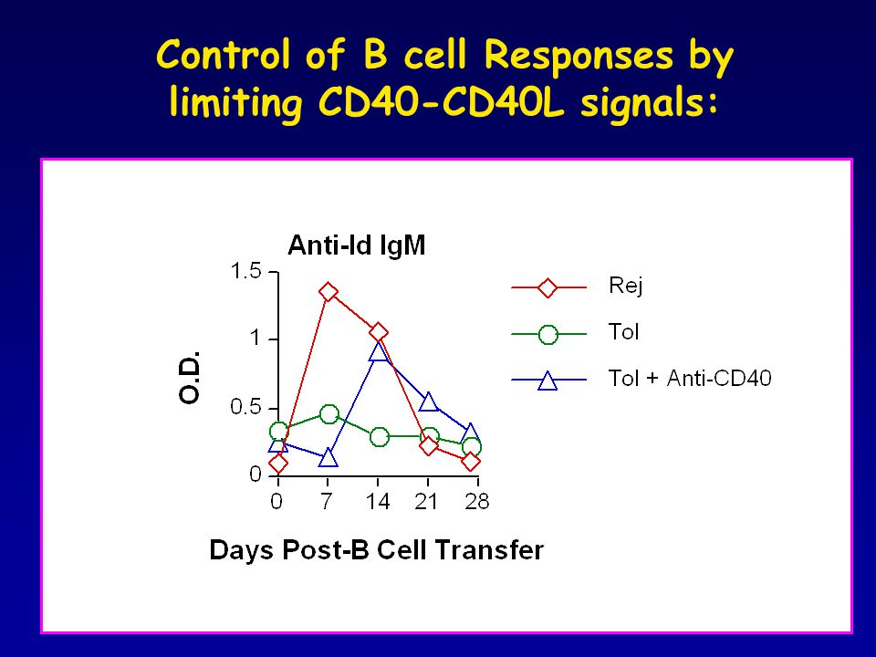 Peripheral B cell Tolerance: Regulation of T cell help m F1 (B/6 x C3H) heart + 3.83 BCR-Ki B cells Day 60-80 Day 0 DST + MR1 Naive