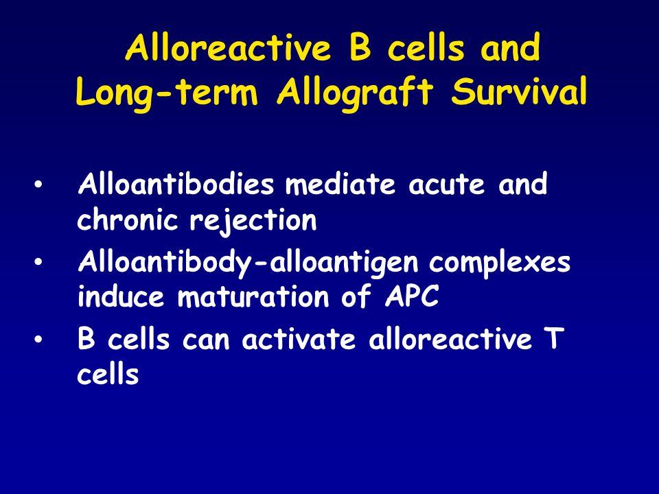 Alloreactive B cells and Long-term Allograft Survival Alloantibodies mediate acute and chronic rejection Alloantibody-alloantigen complexes induce maturation of APC B cells can activate alloreactive T cells