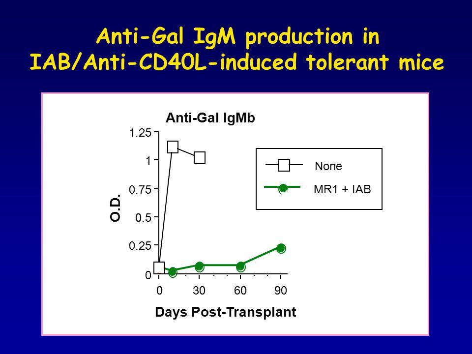 Anti-Gal IgM production in IAB/Anti-CD40L-induced tolerant mice 0 0.25 0.5 0.75 1 1.25 O.D. 0306090 Days Post-Transplant Anti-Gal IgMb None MR1 + IAB