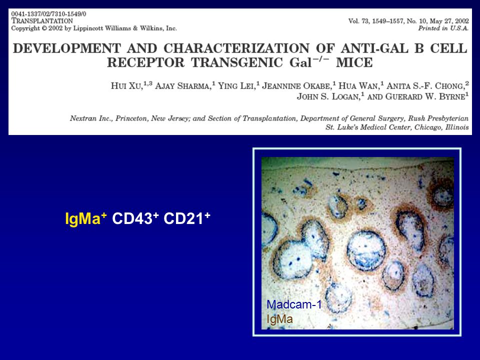 Anti-Gal IgMa production following challenge with BALB/c hearts Days Post-B cell Transfer Naive Tolerant