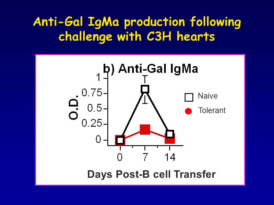 Anti-Gal IgMa production following challenge with C3H hearts Days Post-B cell Transfer Naive Tolerant