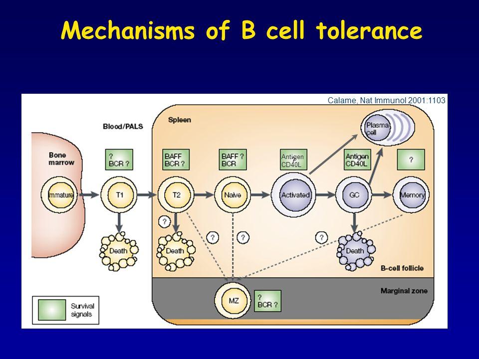 Mechanisms of B cell tolerance Calame, Nat Immunol 2001:1103 Antigen CD40L