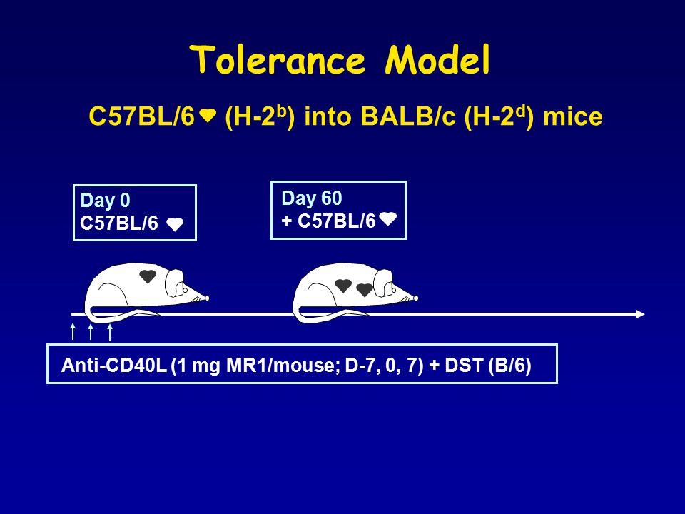 Tolerance Model Day 0 C57BL/6 Day 60 + C57BL/6 Anti-CD40L (1 mg MR1/mouse; D-7, 0, 7) + DST (B/6) C57BL/6 (H-2 b ) into BALB/c (H-2 d ) mice