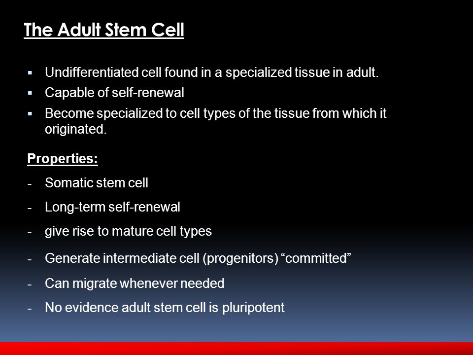 The Adult Stem Cell  Undifferentiated cell found in a specialized tissue in adult.  Capable of self-renewal  Become specialized to cell types of th