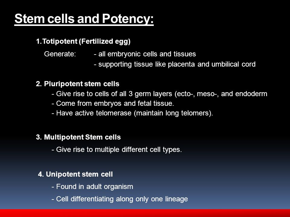 Stem cells and Potency: 1.Totipotent (Fertilized egg) Generate: - all embryonic cells and tissues - supporting tissue like placenta and umbilical cord