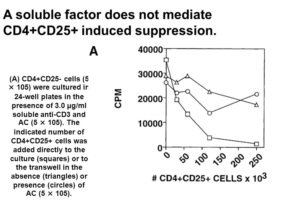 (A) CD4+CD25- cells (5 × 105) were cultured in 24-well plates in the presence of 3.0 µg/ml soluble anti-CD3 and AC (5 × 105).