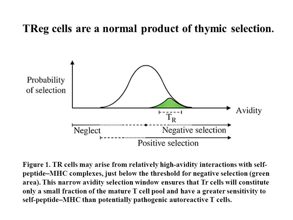 Figure 1. TR cells may arise from relatively high-avidity interactions with self- peptide–MHC complexes, just below the threshold for negative selecti