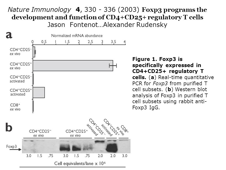 Nature Immunology 4, 330 - 336 (2003) Foxp3 programs the development and function of CD4+CD25+ regulatory T cells Jason Fontenot…Alexander Rudensky Figure 1.