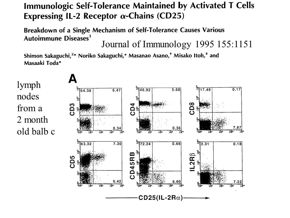 Journal of Immunology 1995 155:1151 lymph nodes from a 2 month old balb c