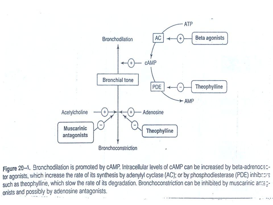 Sympathomimetics  - adrenoceptor agonists Mechanism of Action  direct  2 stimulation  stimulate adenyl cyclase  Increase cAMP  bronchodilatio