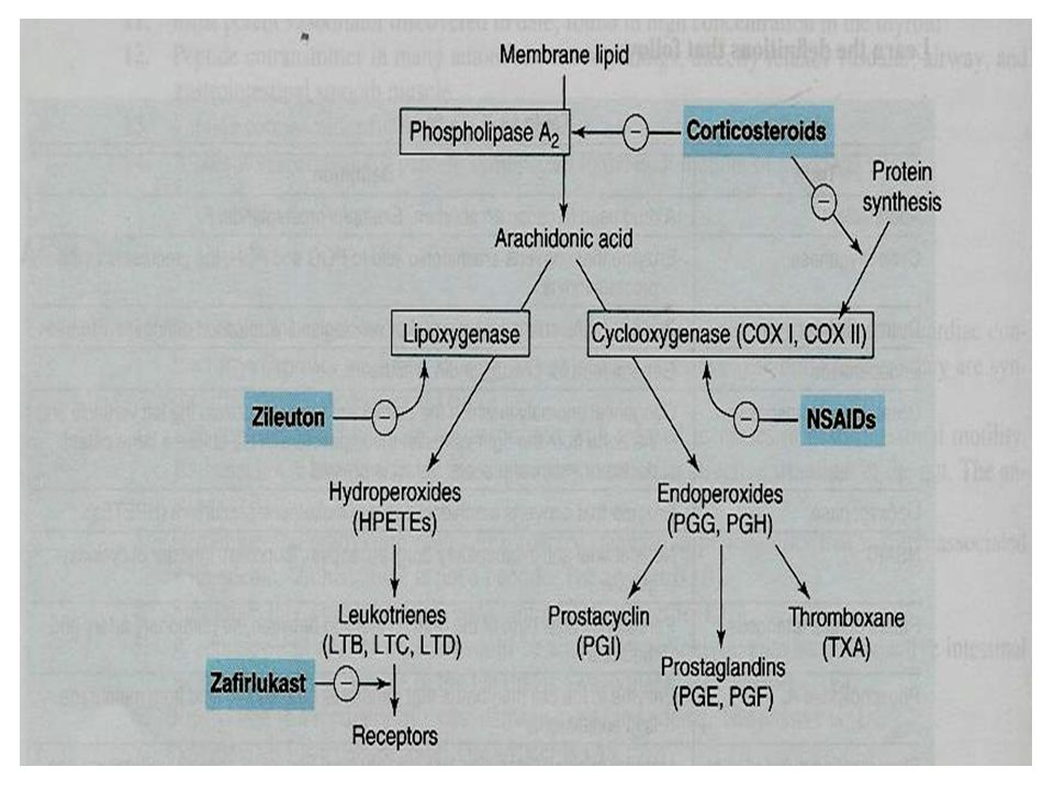 Glucocorticoids Mechanism of action  Inhibition of phospholipase A2 therefore, ↓ prostaglandin and leukotrienes  ↓ Number of inflammatory cells in a