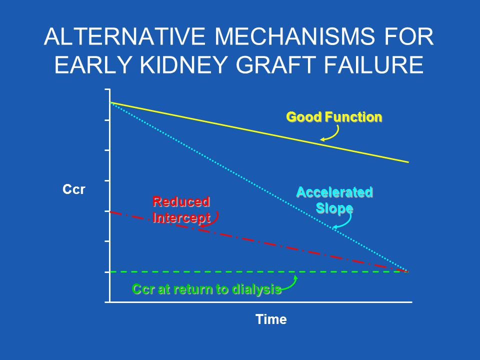 ALTERNATIVE MECHANISMS FOR EARLY KIDNEY GRAFT FAILURE Ccr Time Ccr at return to dialysis Good Function Accelerated Slope Reduced Intercept
