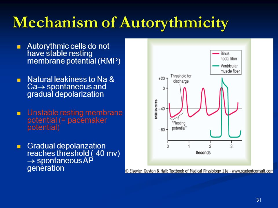 Mechanism of Autorythmicity Autorythmic cells do not have stable resting membrane potential (RMP) Natural leakiness to Na & Ca  spontaneous and gradual depolarization Unstable resting membrane potential (= pacemaker potential) Gradual depolarization reaches threshold (-40 mv)  spontaneous AP generation 31