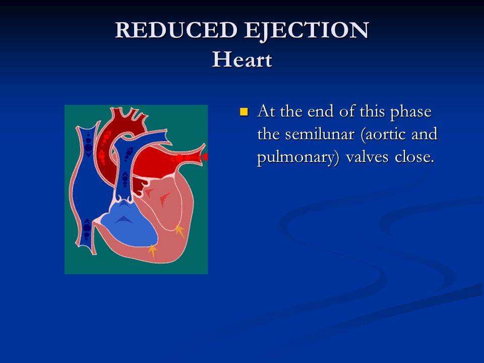 REDUCED EJECTION Heart At the end of this phase the semilunar (aortic and pulmonary) valves close.