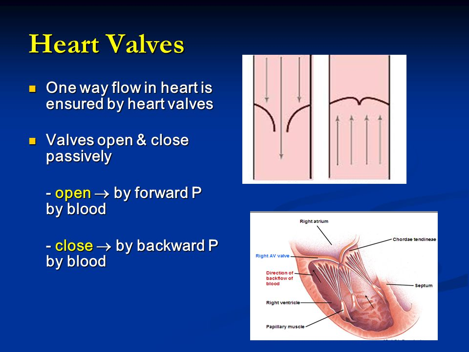 Heart Valves One way flow in heart is ensured by heart valves One way flow in heart is ensured by heart valves Valves open & close passively Valves open & close passively - open  by forward P by blood - open  by forward P by blood - close  by backward P by blood - close  by backward P by blood