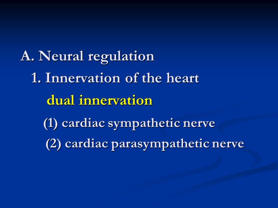 A.Neural regulation 1.