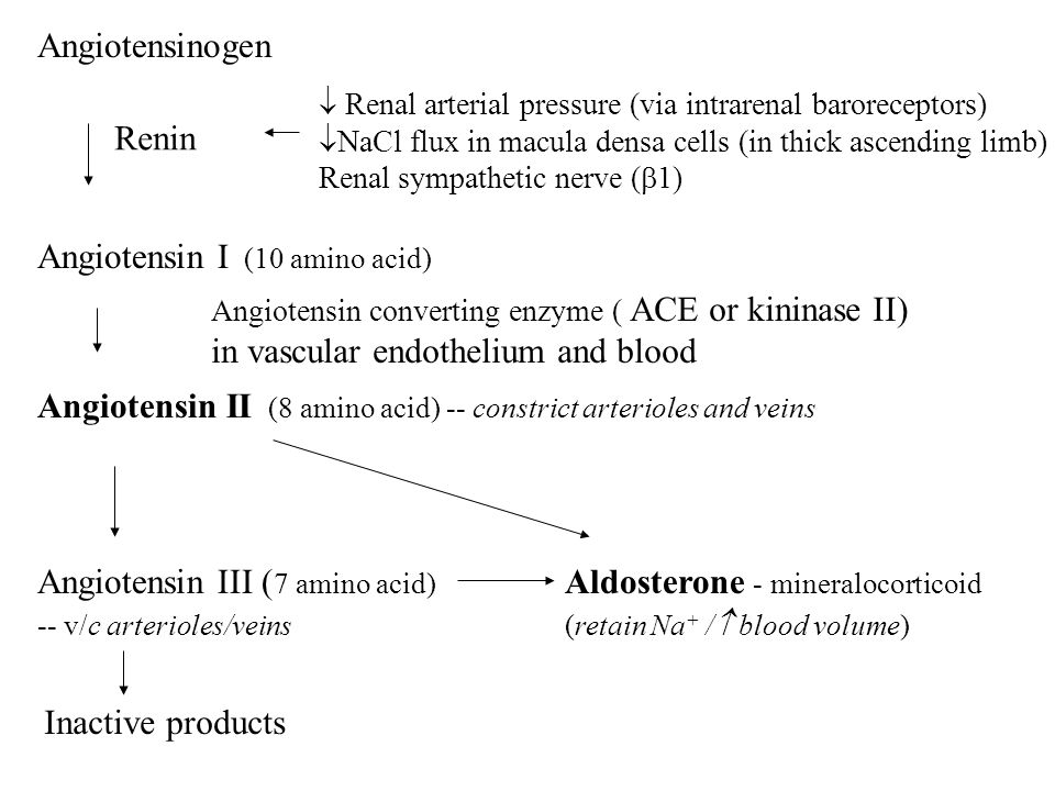 Angiotensinogen Angiotensin I (10 amino acid) Angiotensin II (8 amino acid) -- constrict arterioles and veins Angiotensin III ( 7 amino acid) Aldosterone - mineralocorticoid -- v/c arterioles/veins(retain Na + /  blood volume) Inactive products Renin  Renal arterial pressure (via intrarenal baroreceptors)  NaCl flux in macula densa cells (in thick ascending limb) Renal sympathetic nerve (  1) Angiotensin converting enzyme ( ACE or kininase II) in vascular endothelium and blood
