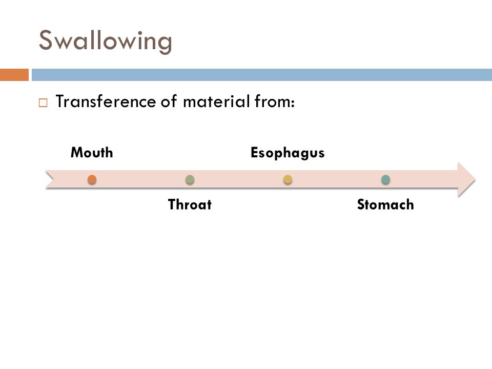 Swallowing  Transference of material from: Mouth Throat Esophagus Stomach