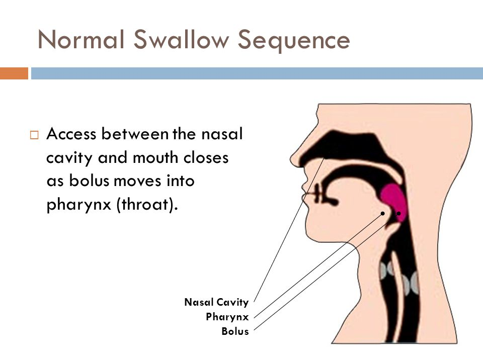 Normal Swallow Sequence  Access between the nasal cavity and mouth closes as bolus moves into pharynx (throat). Nasal Cavity Pharynx Bolus