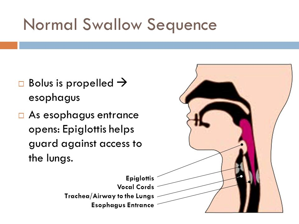Normal Swallow Sequence  Bolus is propelled  esophagus  As esophagus entrance opens: Epiglottis helps guard against access to the lungs. Epiglottis