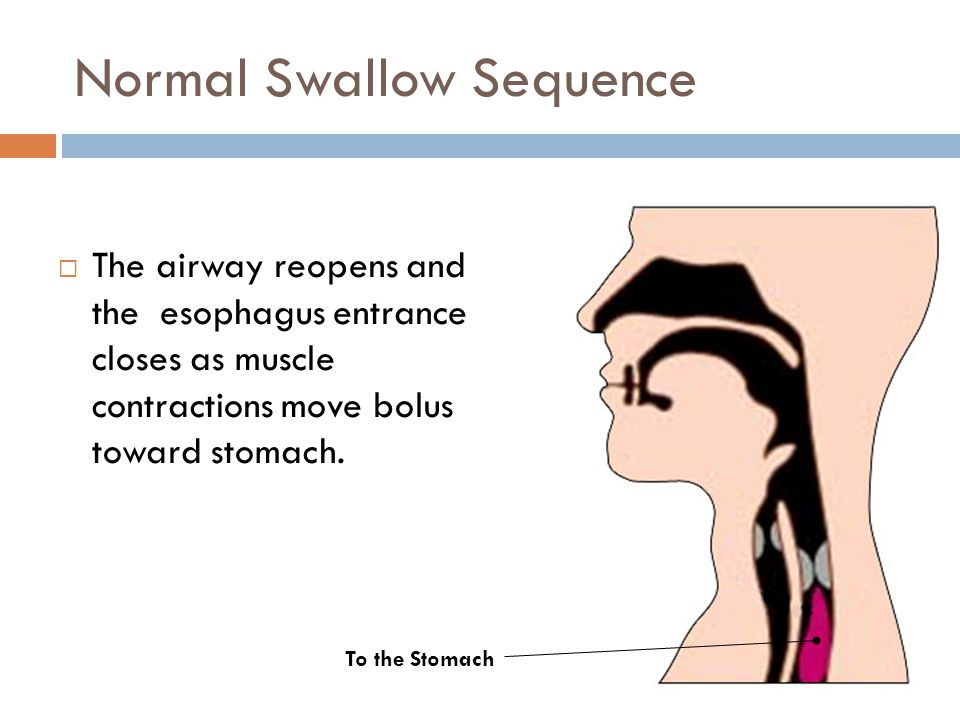 Normal Swallow Sequence  The airway reopens and the esophagus entrance closes as muscle contractions move bolus toward stomach. To the Stomach