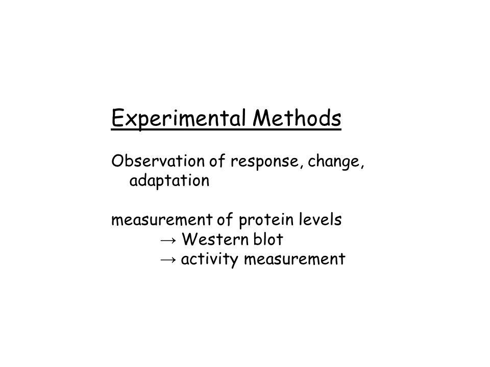 Experimental Methods Observation of response, change, adaptation measurement of protein levels → Western blot → activity measurement