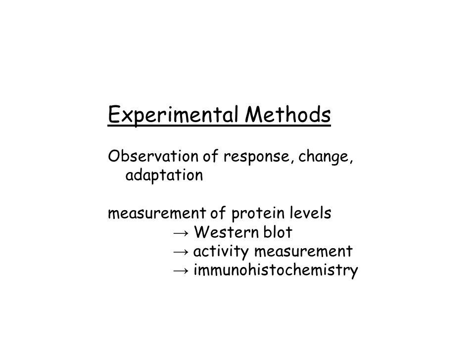 Experimental Methods Observation of response, change, adaptation measurement of protein levels → Western blot → activity measurement → immunohistochem