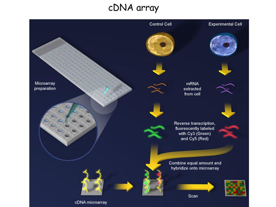 cDNA array