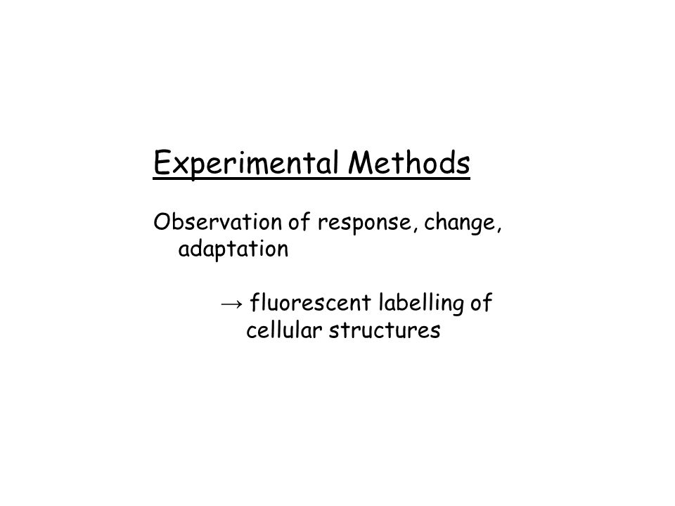 Experimental Methods Observation of response, change, adaptation → fluorescent labelling of cellular structures