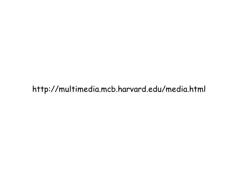 http://multimedia.mcb.harvard.edu/media.html