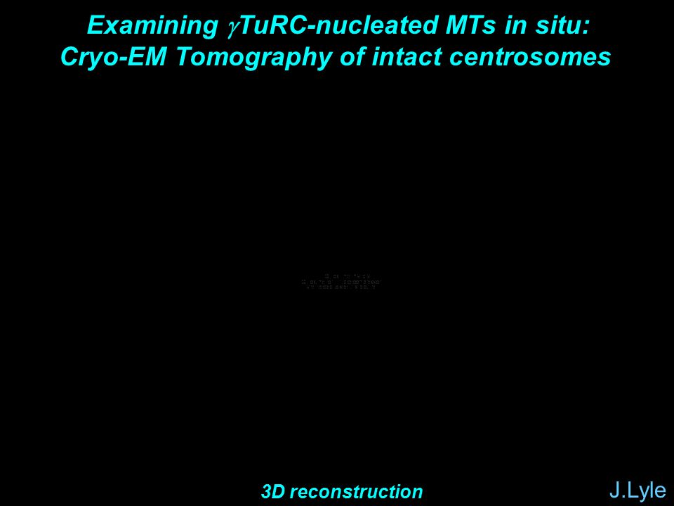  Examining  TuRC-nucleated MTs in situ: Cryo-EM Tomography of intact centrosomes J.Lyle 3D reconstruction