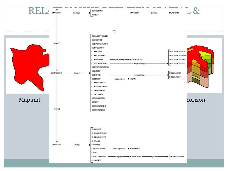 RELATIONSHIP BETWEEN SPATIAL & TABULAR DATA MapunitComponentHorizon mukeycokey 7