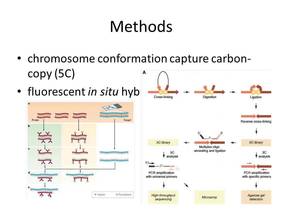 Methods chromosome conformation capture carbon- copy (5C) fluorescent in situ hybridization (FISH)