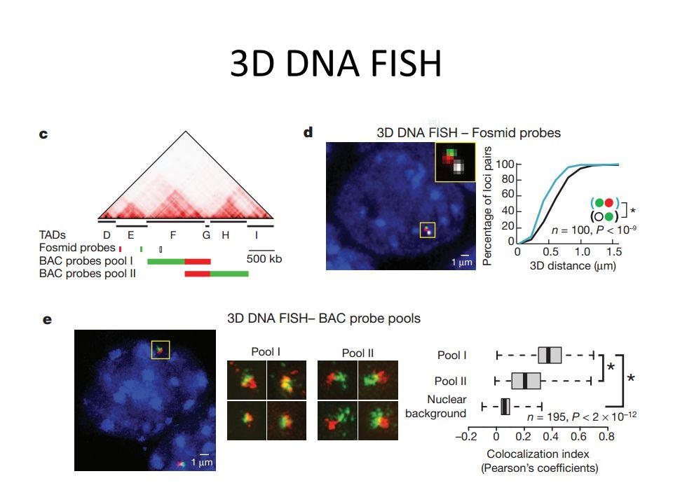 3D DNA FISH