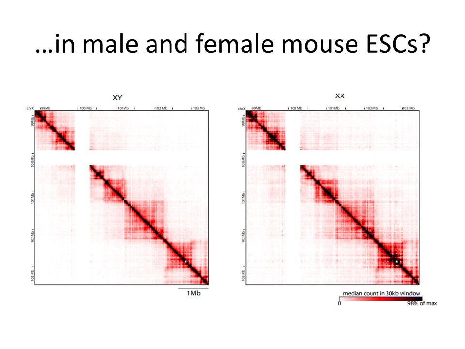 …in male and female mouse ESCs
