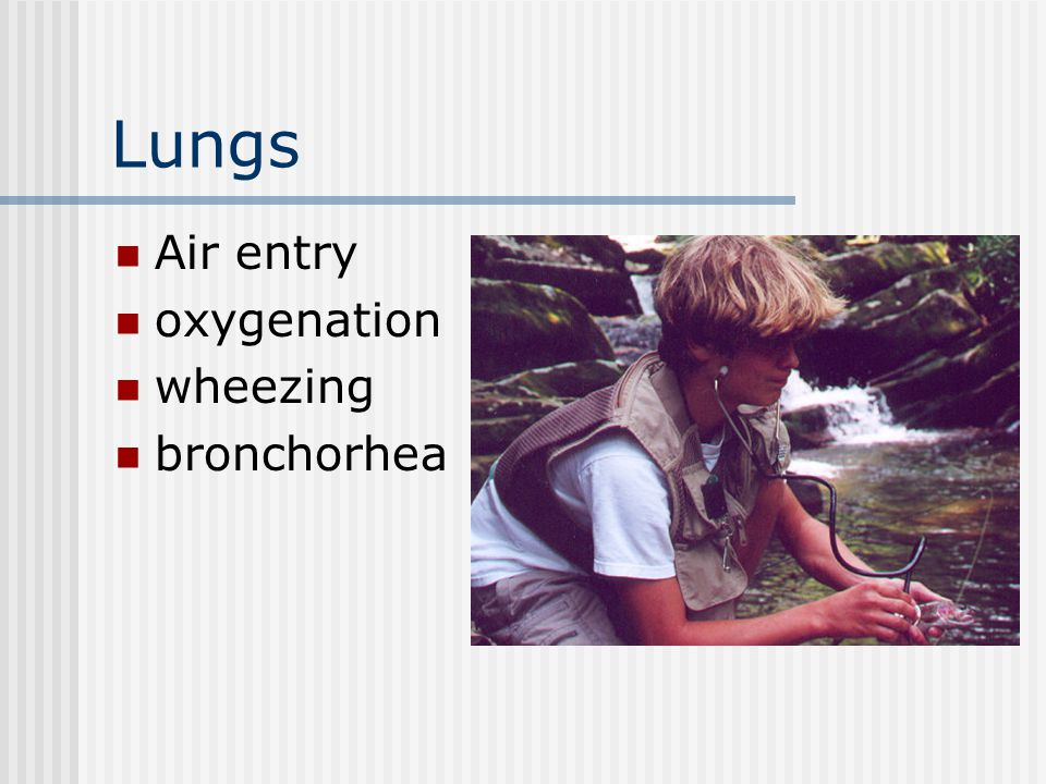 Lungs Air entry oxygenation wheezing bronchorhea