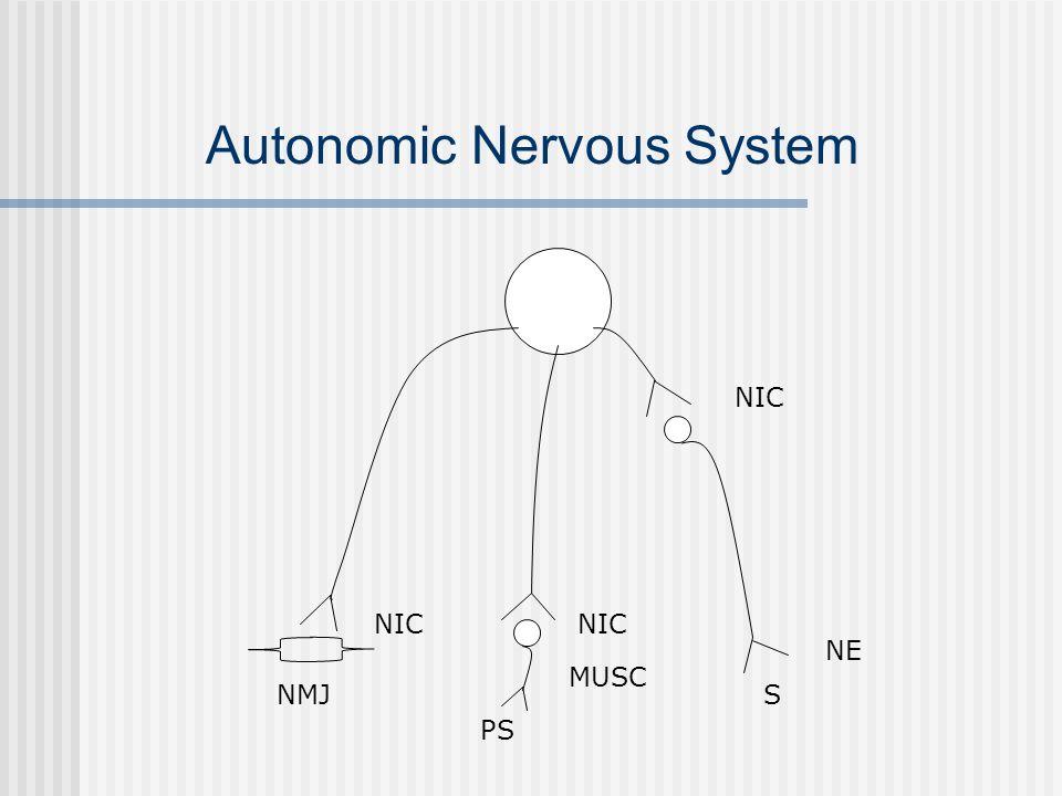 Autonomic Nervous System NIC NE S NIC MUSC PS NIC NMJ