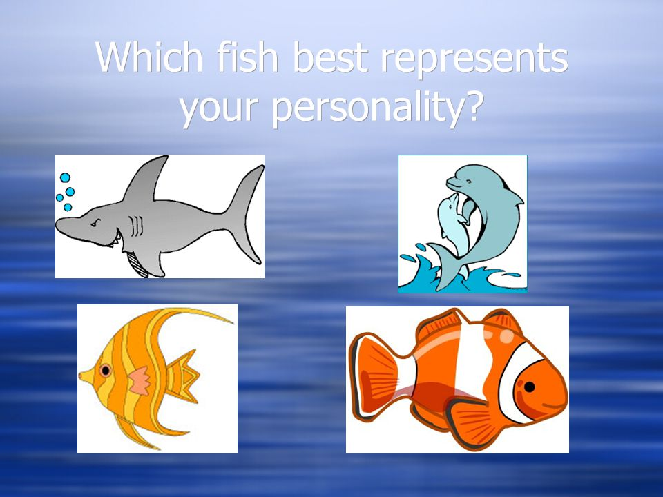 Which fish best represents your personality?