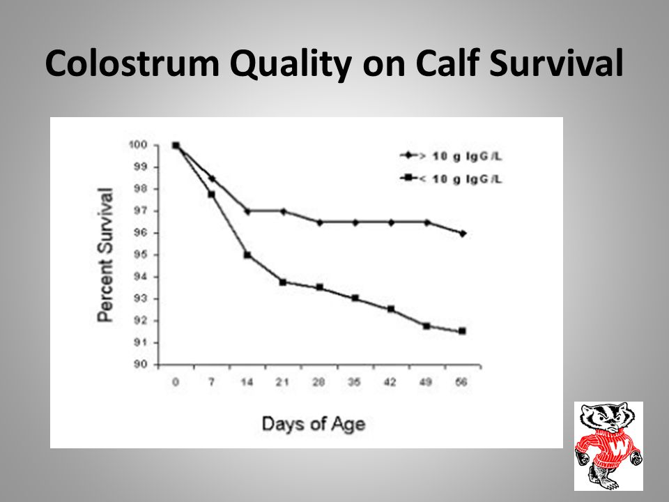 Colostrum Quality on Calf Survival