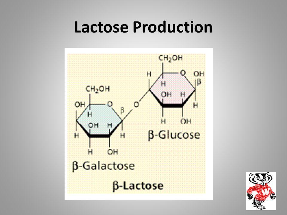 Lactose Production
