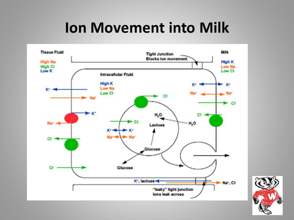 Ion Movement into Milk