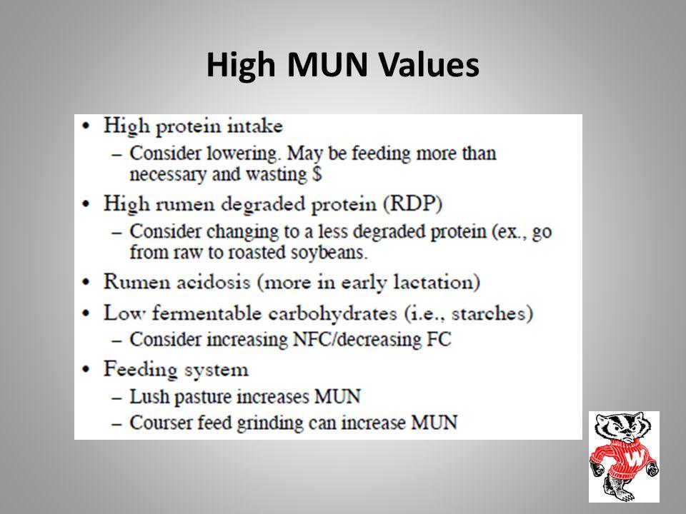 High MUN Values