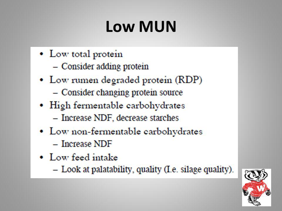 Low MUN