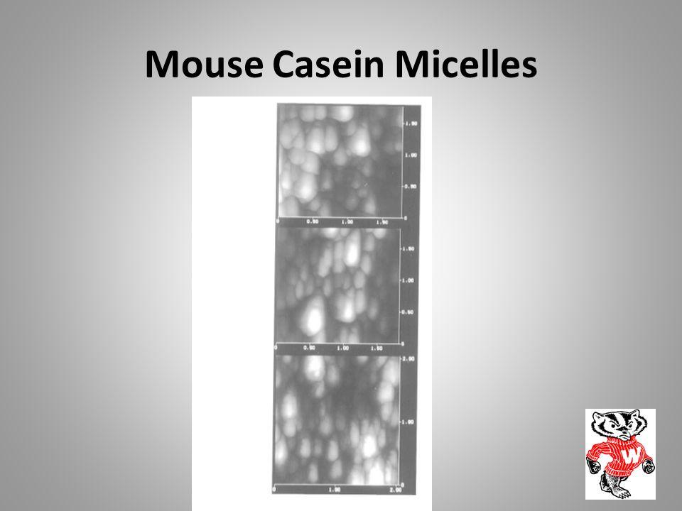 Mouse Casein Micelles