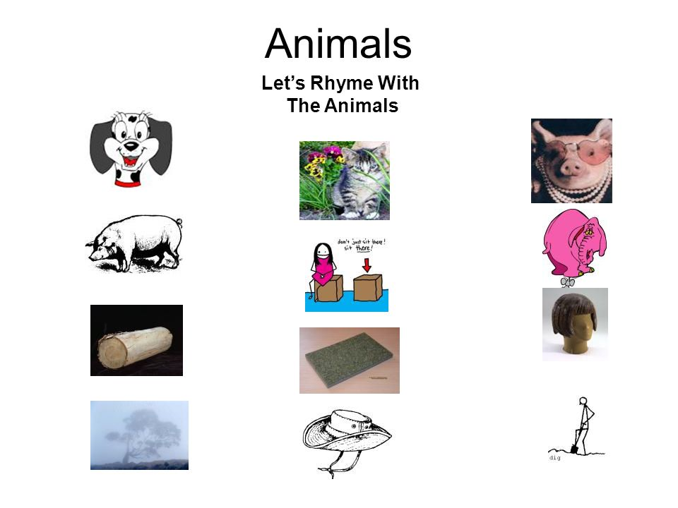 Animals Let's Rhyme With The Animals