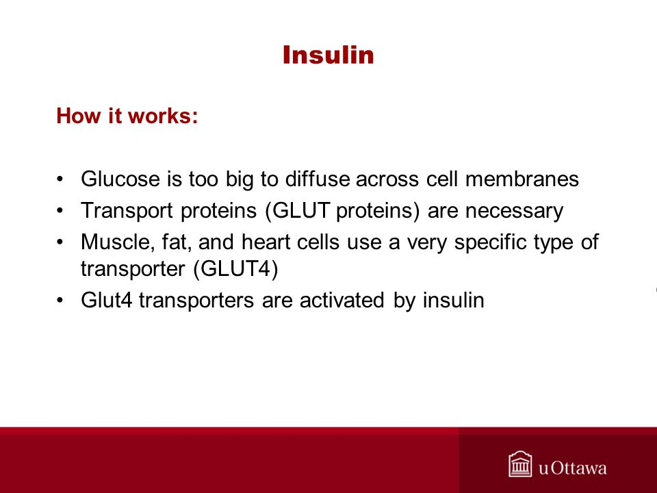 Insulin How it works: Glucose is too big to diffuse across cell membranes Transport proteins (GLUT proteins) are necessary Muscle, fat, and heart cells use a very specific type of transporter (GLUT4) Glut4 transporters are activated by insulin