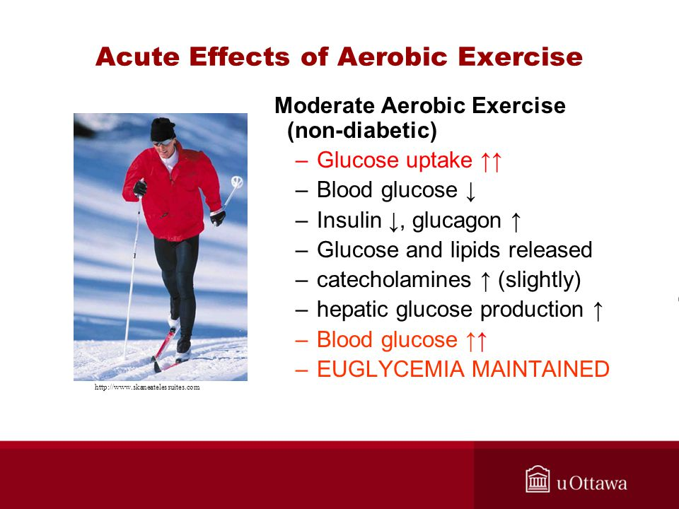 Acute Effects of Aerobic Exercise Moderate Aerobic Exercise (non-diabetic) –Glucose uptake ↑↑ –Blood glucose ↓ –Insulin ↓, glucagon ↑ –Glucose and lipids released –catecholamines ↑ (slightly) –hepatic glucose production ↑ –Blood glucose ↑↑ –EUGLYCEMIA MAINTAINED http://www.skaneatelessuites.com