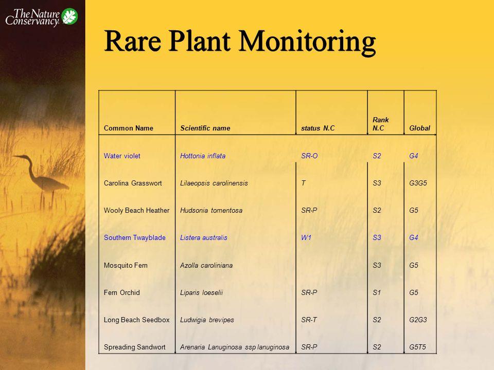 Rare Plant Monitoring Common NameScientific namestatus N.C Rank N.CGlobal Water violetHottonia inflataSR-OS2G4 Carolina GrasswortLilaeopsis carolinensisTS3G3G5 Wooly Beach HeatherHudsonia tomentosaSR-PS2G5 Southern TwaybladeListera australisW1S3G4 Mosquito FernAzolla caroliniana S3G5 Fern OrchidLiparis loeseliiSR-PS1G5 Long Beach SeedboxLudwigia brevipesSR-TS2G2G3 Spreading SandwortArenaria Lanuginosa ssp lanuginosaSR-PS2G5T5