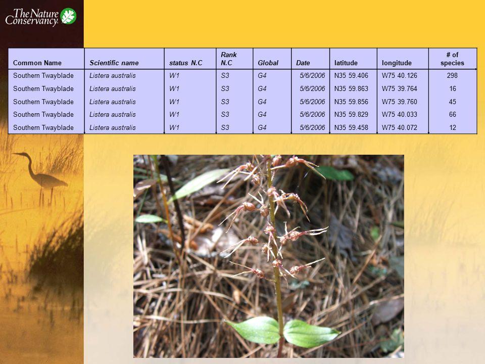 Common NameScientific namestatus N.C Rank N.CGlobalDatelatitudelongitude # of species Southern TwaybladeListera australisW1S3G45/6/2006N35 59.406W75 40.126298 Southern TwaybladeListera australisW1S3G45/6/2006N35 59.863W75 39.76416 Southern TwaybladeListera australisW1S3G45/6/2006N35 59.856W75 39.76045 Southern TwaybladeListera australisW1S3G45/6/2006N35 59.829W75 40.03366 Southern TwaybladeListera australisW1S3G45/6/2006N35 59.458W75 40.07212